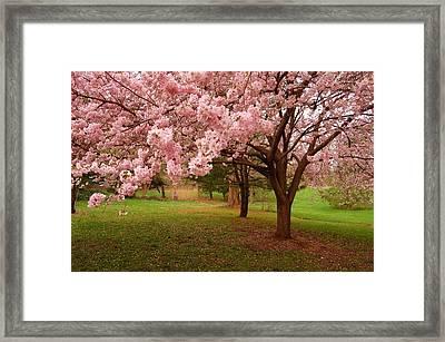 Approach Me - Holmdel Park Framed Print by Angie Tirado