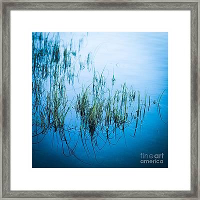 Aquatic Plant Framed Print by Bernard Jaubert