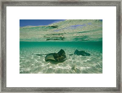 Aquatic Split-level View Of Two Framed Print by Wolcott Henry