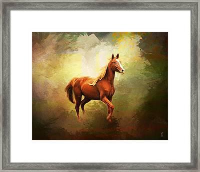 Arabian Horse Framed Print by Jai Johnson