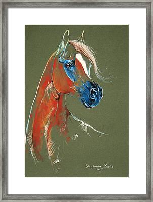 Arabian Horse Pastel Framed Print by Paulina Stasikowska