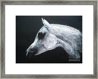 Arabian King Framed Print by Sabina Haas