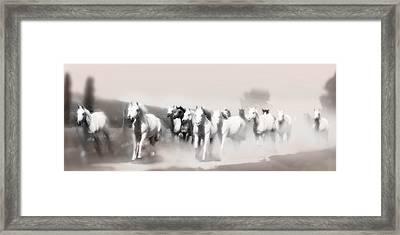 Arabian Mares - Home Run  Framed Print by ELA-EquusArt