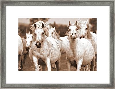 Arabian Mares Home Run Framed Print by ELA-EquusArt
