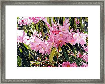 Arboretum Rhododendrons Framed Print by David Lloyd Glover