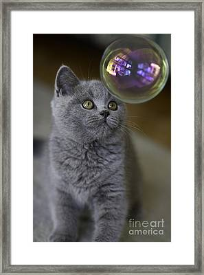 Archie With Bubble Framed Print by Avalon Fine Art Photography
