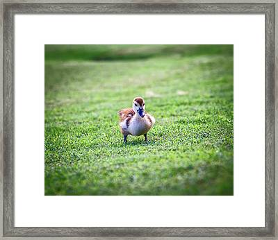 Are You My Mother? Framed Print by Camille Lopez