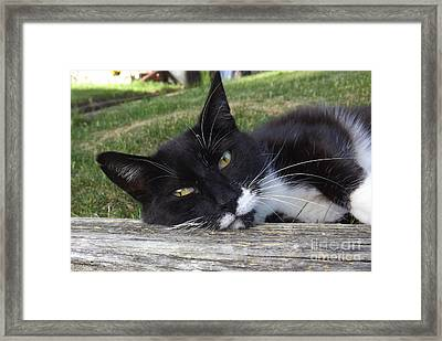 Are You Taking My Best Shot For This Pose Framed Print by Lingfai Leung