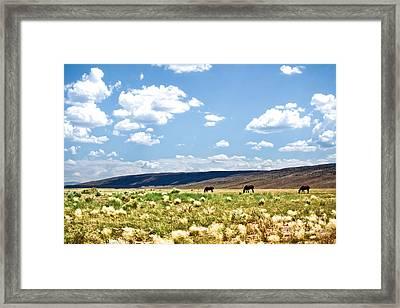Arizona Desert Horses Framed Print by Ryan Kelly