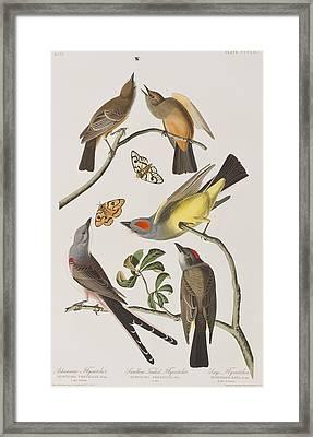Arkansaw Flycatcher Swallow-tailed Flycatcher Says Flycatcher Framed Print by John James Audubon