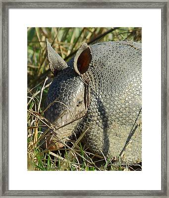 Armadillo By Morning Framed Print by Robert Frederick