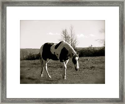 Around The Pasture Framed Print by Debra     Vatalaro
