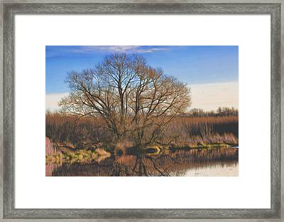 Artistic Creek Tree  Framed Print by Leif Sohlman