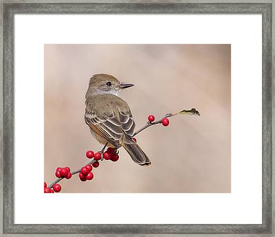 Ash-throated Flycatcher On A Branch Framed Print by Morris Finkelstein