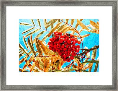 Ashberry Framed Print by Alexander Senin