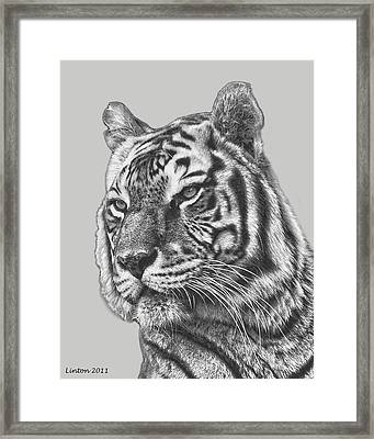 Asian Tiger 2 Framed Print by Larry Linton