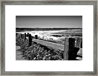 Asilomar In Bloom B And W Framed Print by Joyce Dickens