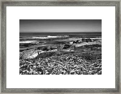 Asilomar In Bloom Two Bandw Framed Print by Joyce Dickens