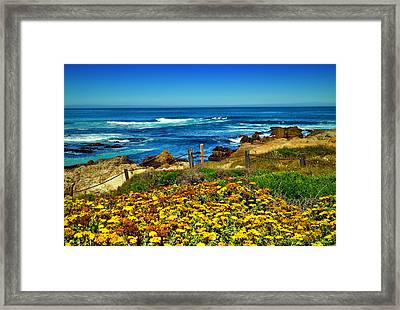 Asilomar In Bloom Two Framed Print by Joyce Dickens