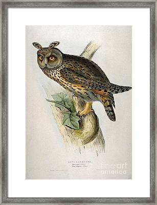 Asio Otus  - Owl Framed Print by Celestial Images