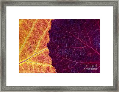 Aspen Abstract Framed Print by Tim Gainey