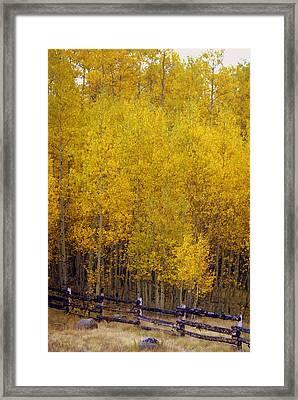 Aspen Fall 2 Framed Print by Marty Koch