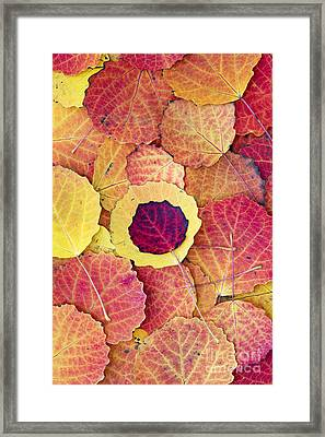 Aspen Fall Framed Print by Tim Gainey