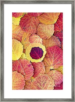 Aspen Fall Framed Print by Tim Gainey