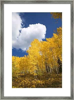Aspens And Sky Framed Print by Ron Dahlquist - Printscapes