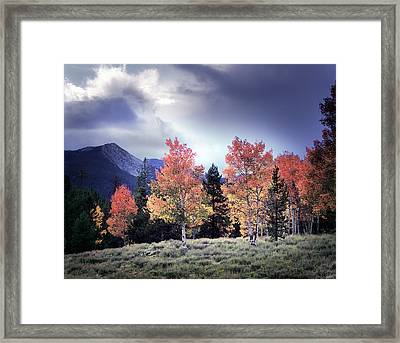 Aspens In Autumn Light Framed Print by Leland D Howard