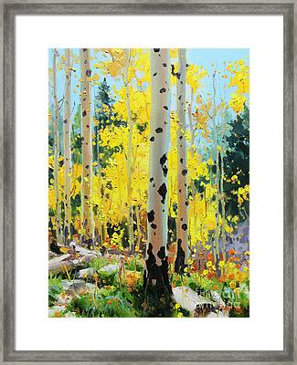 Aspens In Golden Light Framed Print by Gary Kim