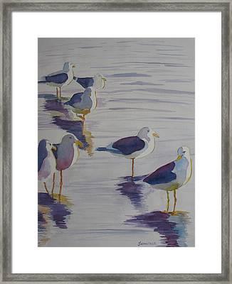 Assorted Gulls Framed Print by Jenny Armitage