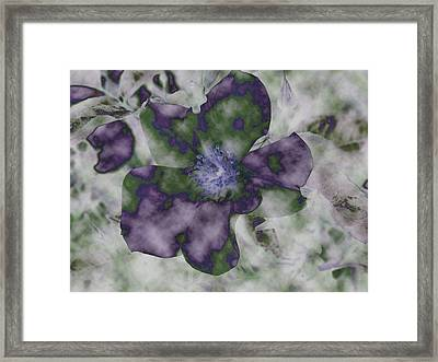 At Peace Framed Print by Bonnie Bruno