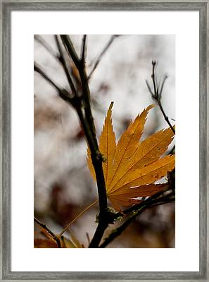 At Rest Framed Print by Mike Reid