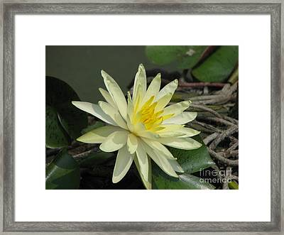 At The Pond Framed Print by Amanda Barcon