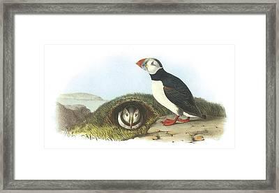 Atlantic Puffin Framed Print by John James Audubon
