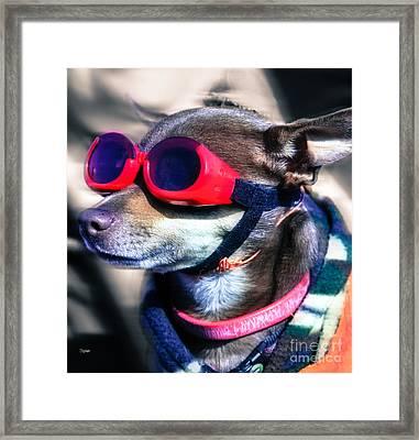 Attitude  Framed Print by Steven  Digman