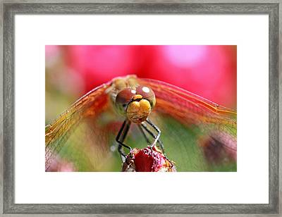 Attracted To Red Framed Print by Donna Kennedy
