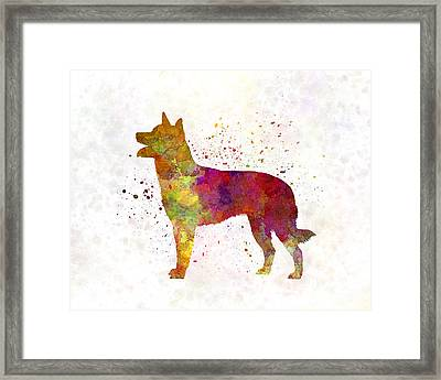 Australian Kelpie In Watercolor Framed Print by Pablo Romero
