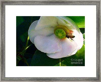 Autograph Tree Framed Print by James Temple