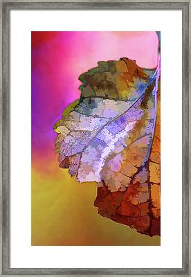 Autumn 1 Framed Print by Terry Davis