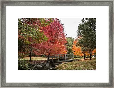 Autumn 2015 Framed Print by CJ Schmit