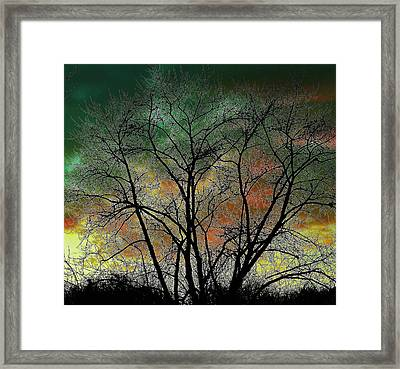 Autumn 4 Framed Print by Todd Sherlock
