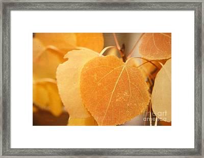 Autumn Aspen Framed Print by Shasta Eone