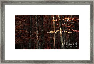 Autumn Branch Framed Print by Svetlana Sewell