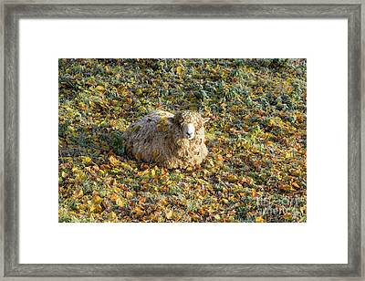 Autumn Chill Framed Print by Tim Gainey