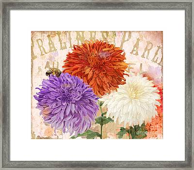 Autumn Chrysanthemums Framed Print by Mindy Sommers