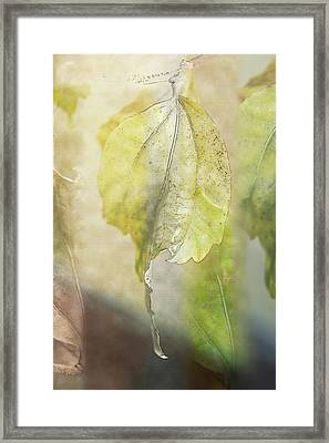 Autumn Collage Framed Print by Terry Davis