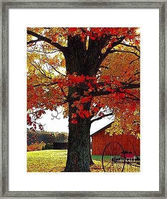 Autumn Color Dance Framed Print by Diane E Berry