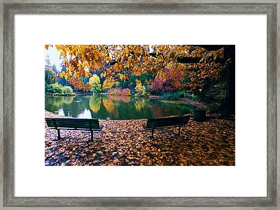 Autumn Color Trees And Fallen Leaves Framed Print by Panoramic Images